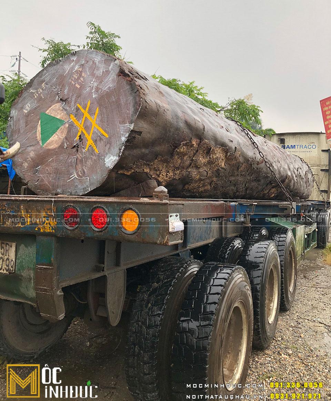 Hình ảnh cây gỗ gụ tự nhiên